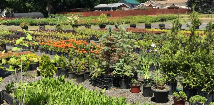 Gardenland, Gardenland USA, Plant Nursery