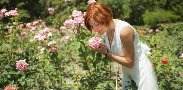 Gardenland, Gardenland USA, Large pink roses